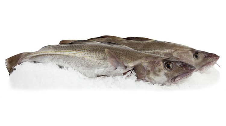Flytning af Thorfisk er udsat til foråret