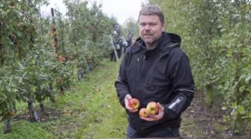 Økologisk æbleproduktion fik 1,4 million på seks timer