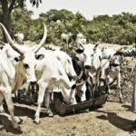 Partnerskab skal styrke en bæredygtig mejerisektor i Nigeria