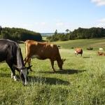 Historisk enighed i landbruget skal sikre dansk økologi