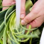 Mere økologi i foodservice og på restauranter