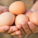 Nestlé modtager pris for æg fra fritgående høns