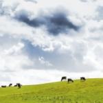 Arla vil afregne på baggrund af klimaaftryk