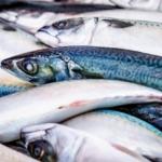 Ulovlige fisk solgt på kræmmermarkeder og campingpladser