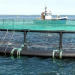 Stort havbrug beskyldes for ulovlig produktion