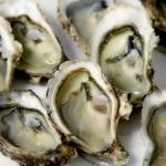 Næse på vej til fiskeriminister for nøl med østerslovgivning